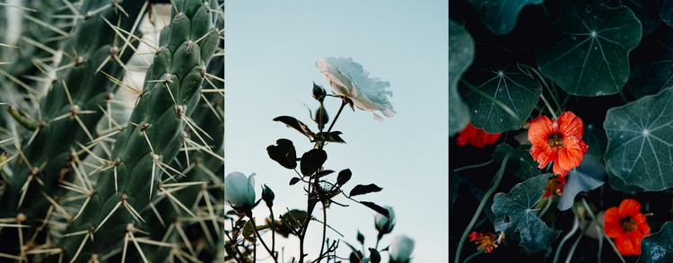 Beautiful nature photography Web Design