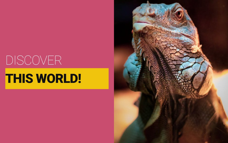 Discover the wild world HTML Template