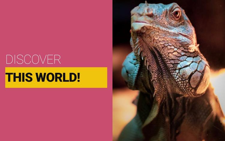 Discover the wild world Website Design