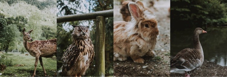 Gallery with wild animals Html Code Example