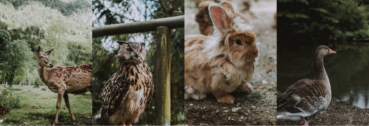Gallery with wild animals HTML Template