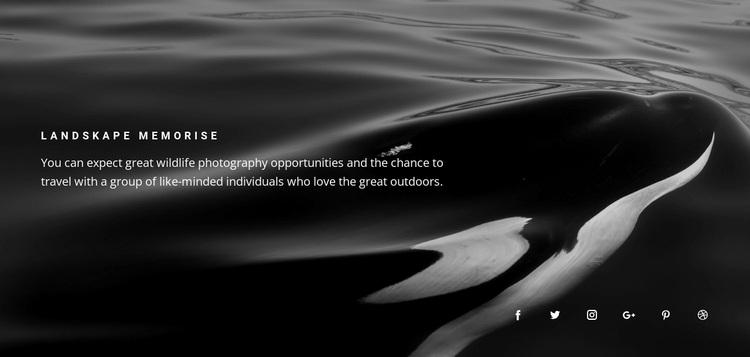 Nature memories Website Design