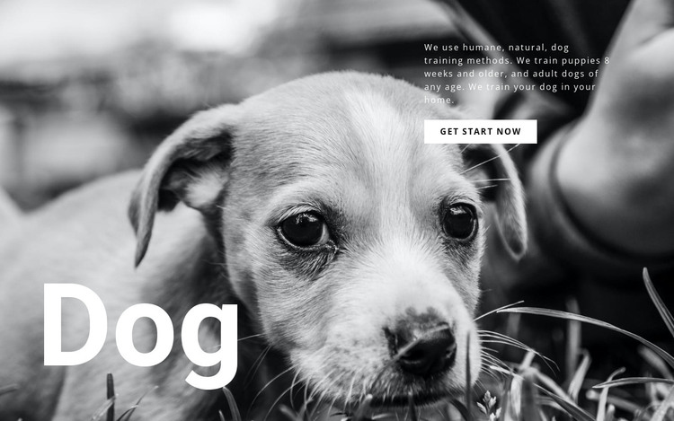 Dog and pets shelter HTML Template