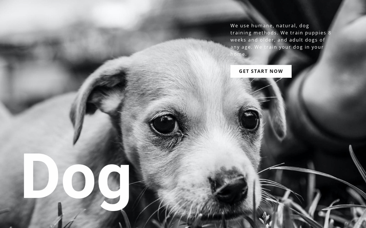 Dog and pets shelter Website Template
