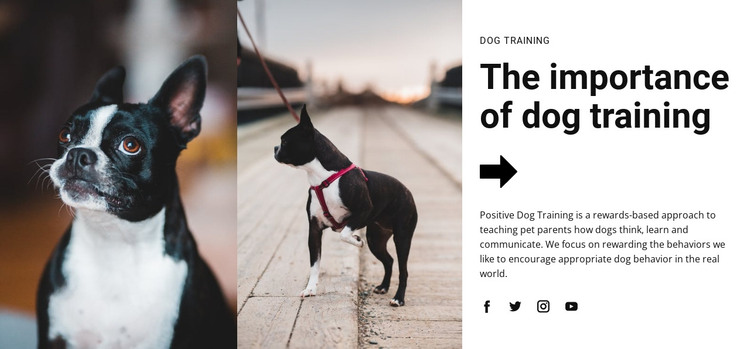 Important dog training HTML Template