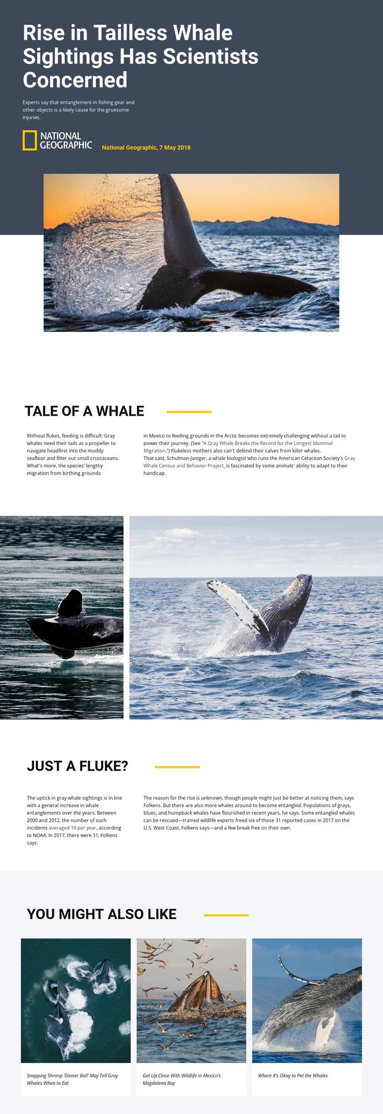 Whale watching center Joomla Template