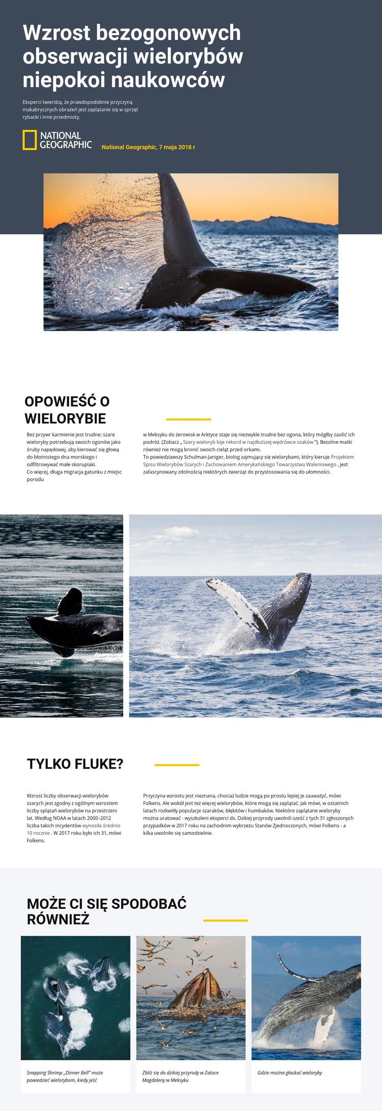 Centrum obserwacji wielorybów Szablon witryny sieci Web
