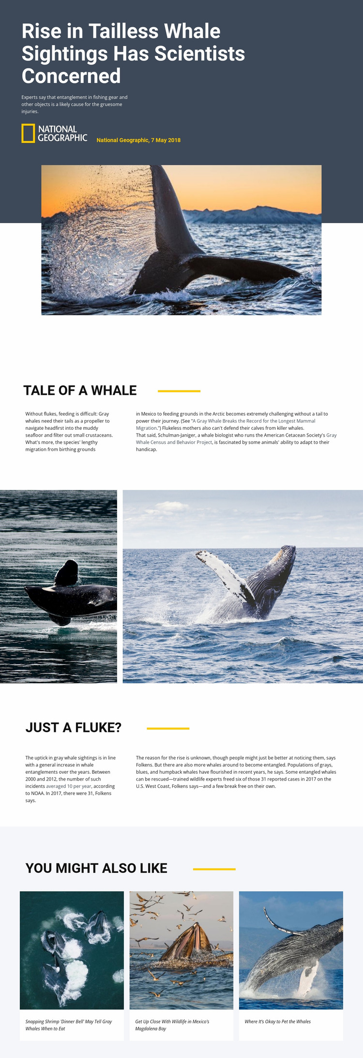 Whale watching center Website Mockup