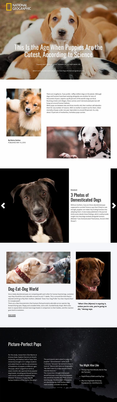 Cutiest home pets Website Mockup