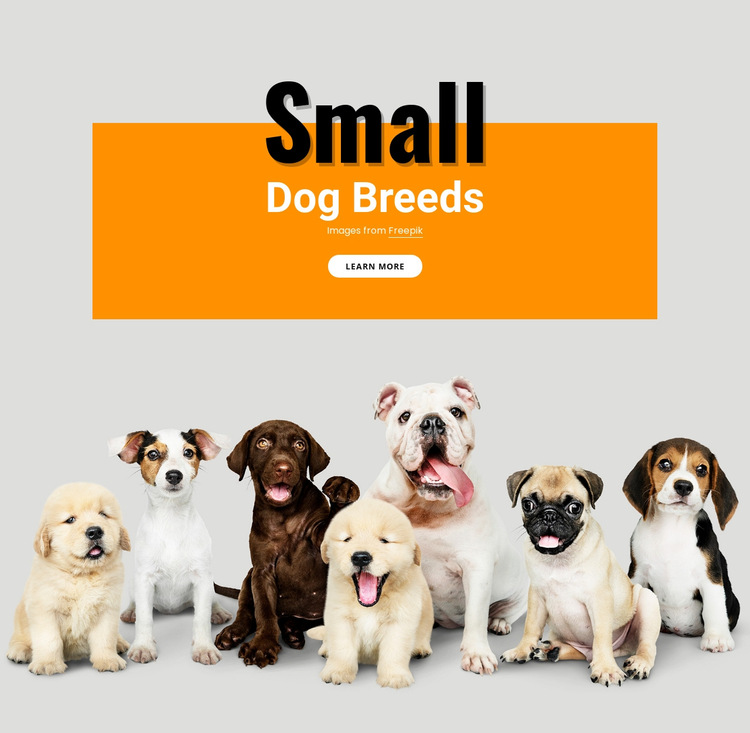 Small dogs breeds HTML5 Template