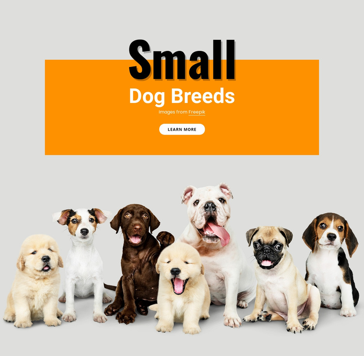 Small dogs breeds Website Template