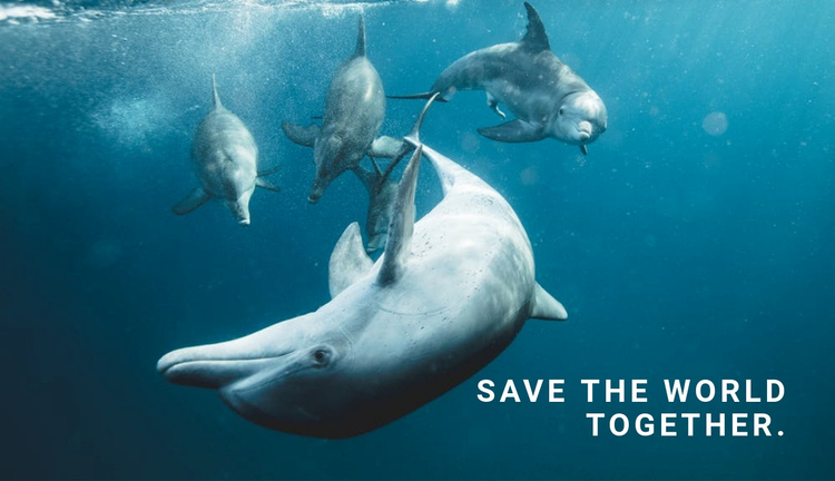 Save the ocean Website Builder Software