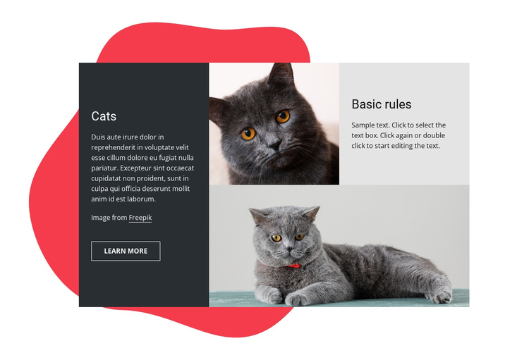 Essential kitten care tips Joomla Template