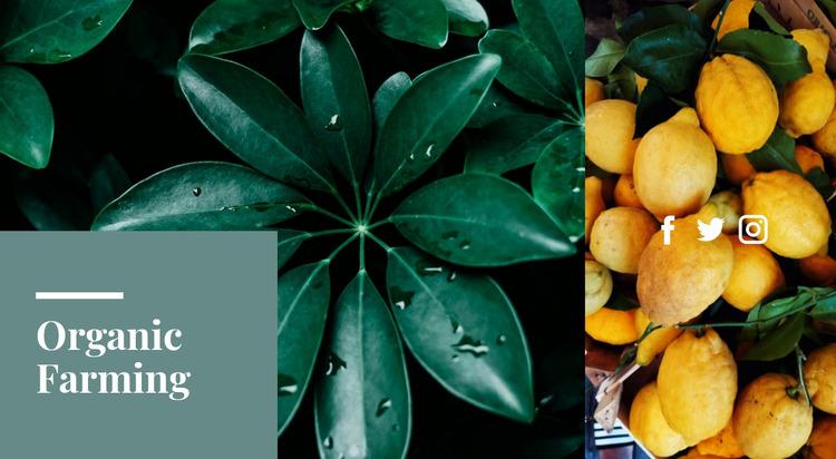 Fresh organic citrus WordPress Website Builder