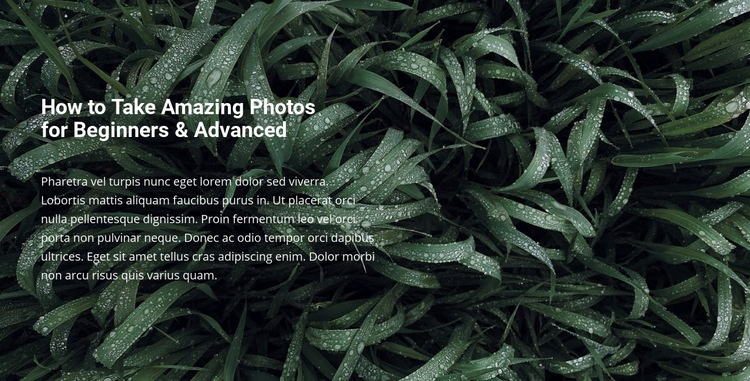 Title and text on a beautiful photo WordPress Website