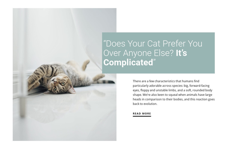 How to care for a domestic cat Website Builder Software