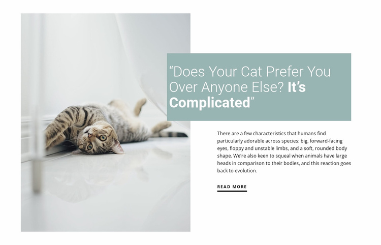How to care for a domestic cat Website Template