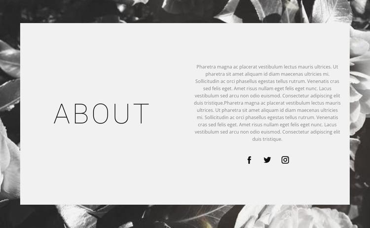 About the best designer WordPress Website Builder
