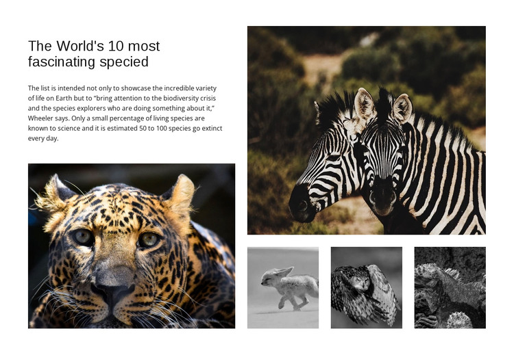 Engaging wildlife photography HTML Template
