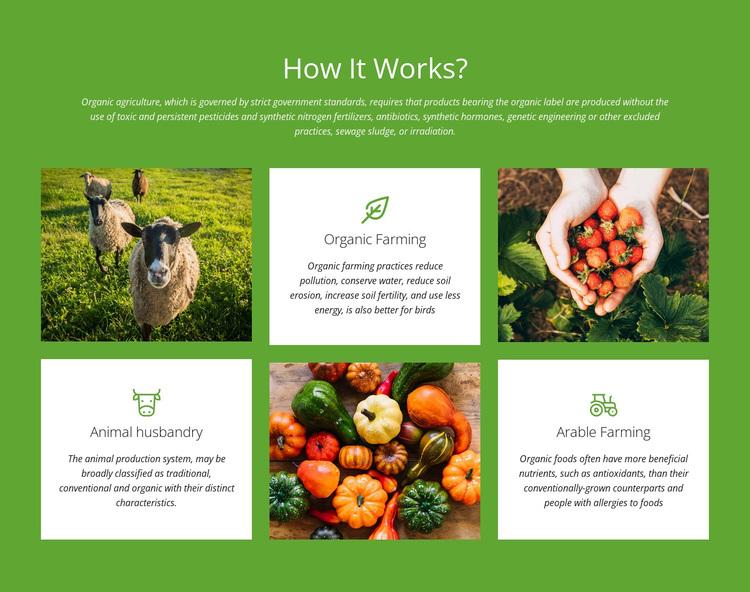 How does a farm work? Template
