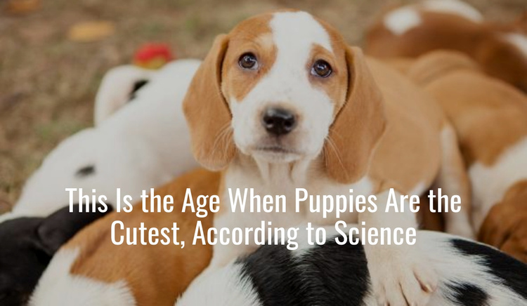 Cutest Puppies Website Template