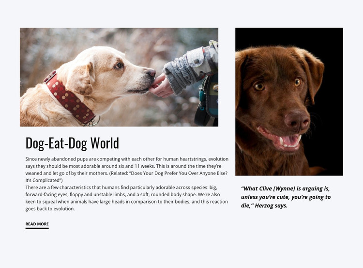 Food for Dog HTML Template