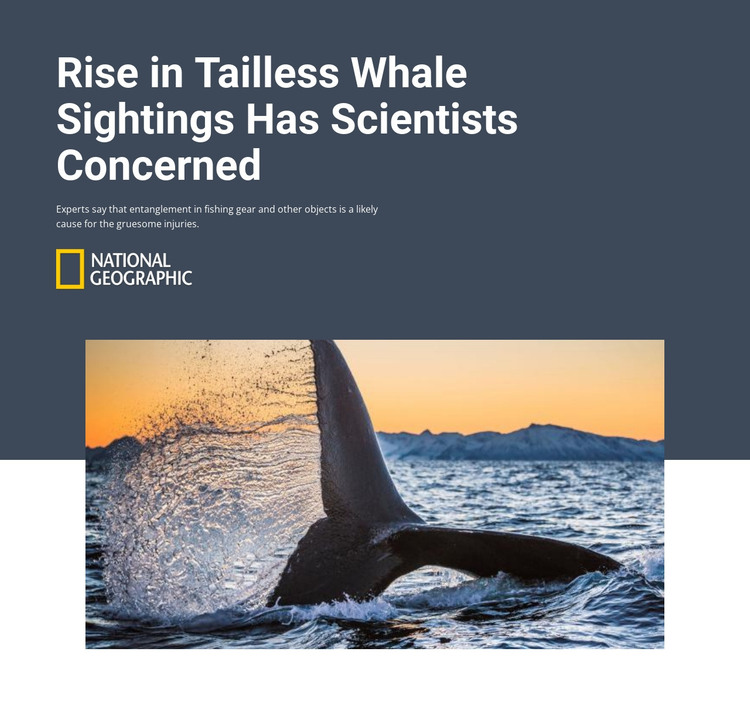 Tailless whale HTML Template