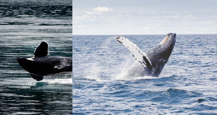 Sea whale animal HTML Template