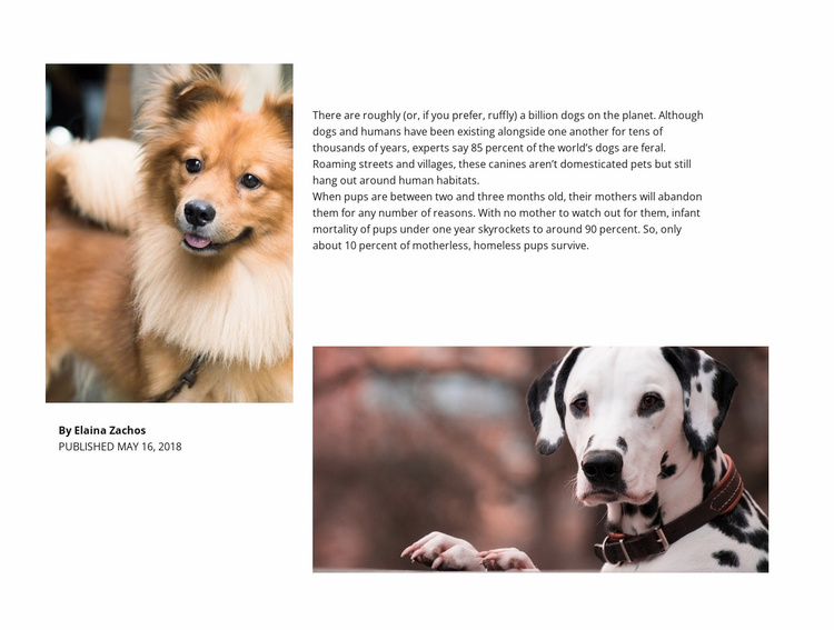 Dog Article Website Template