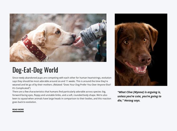 Food for Dog Website Template