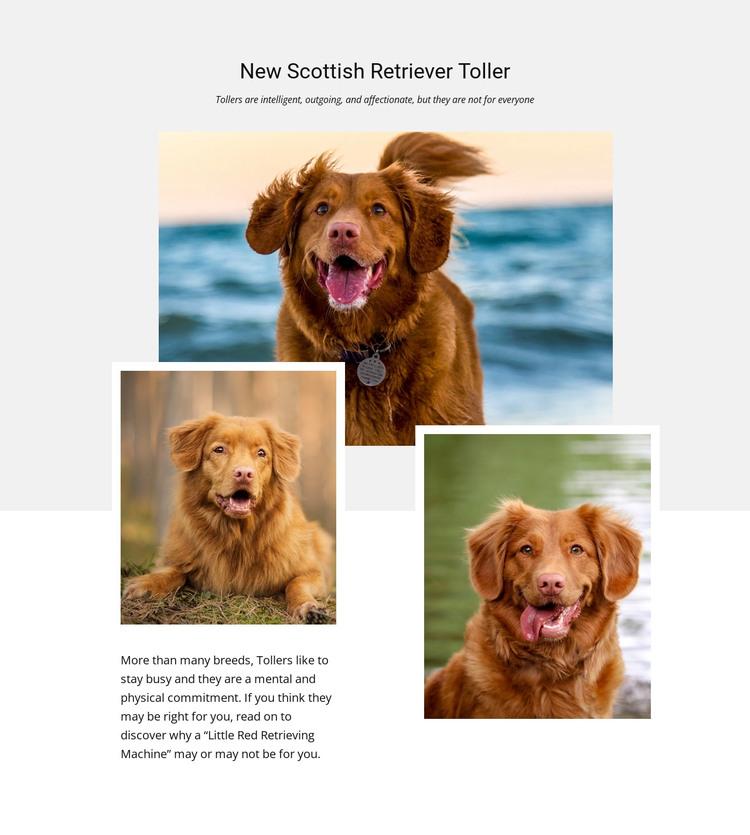 Scottish retriever HTML Template