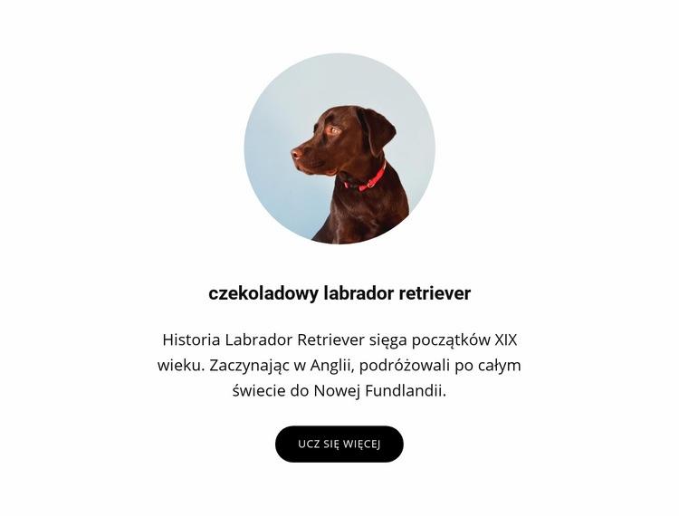 Czekoladowy labrador retriever Szablon witryny sieci Web