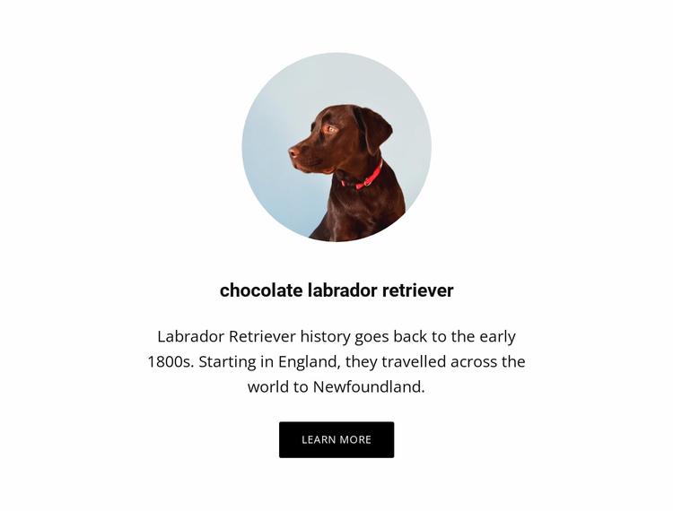 Chocolate labrador retriever Website Template