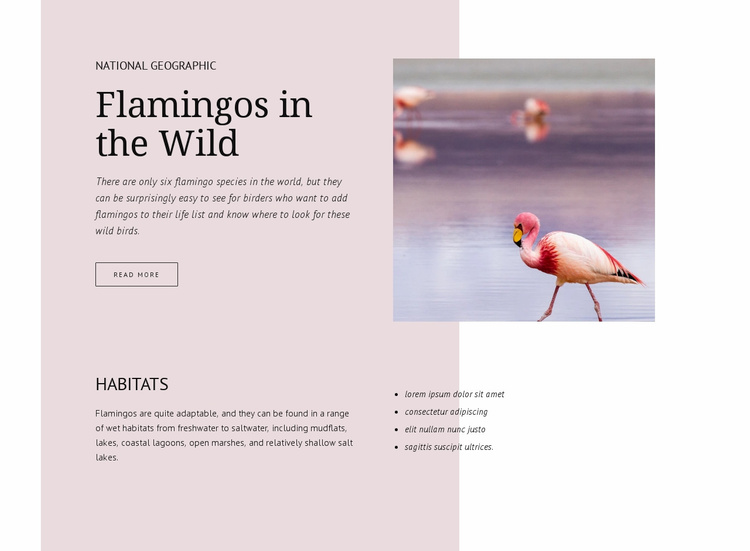 Wild flamingos Website Template