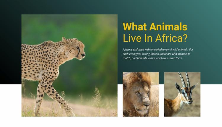 Live in africa Website Template