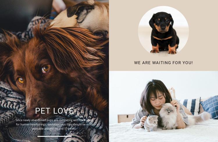 pet love HTML Template