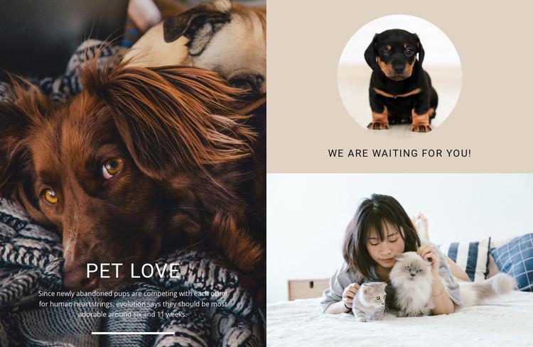 pet love Website Template