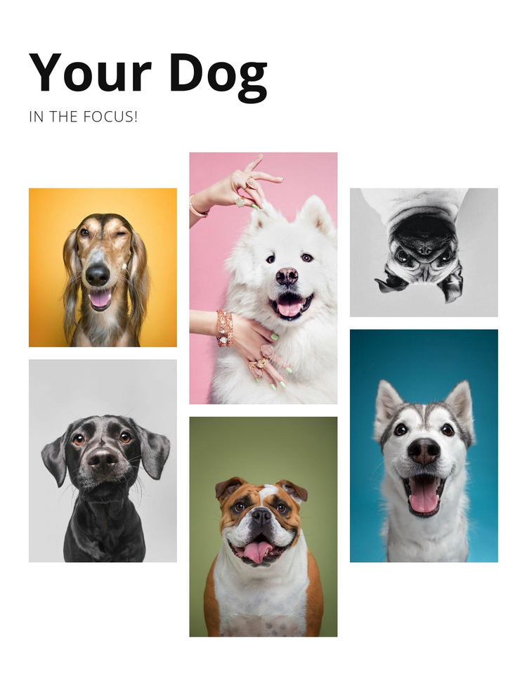 Dog training and behavior modification One Page Template