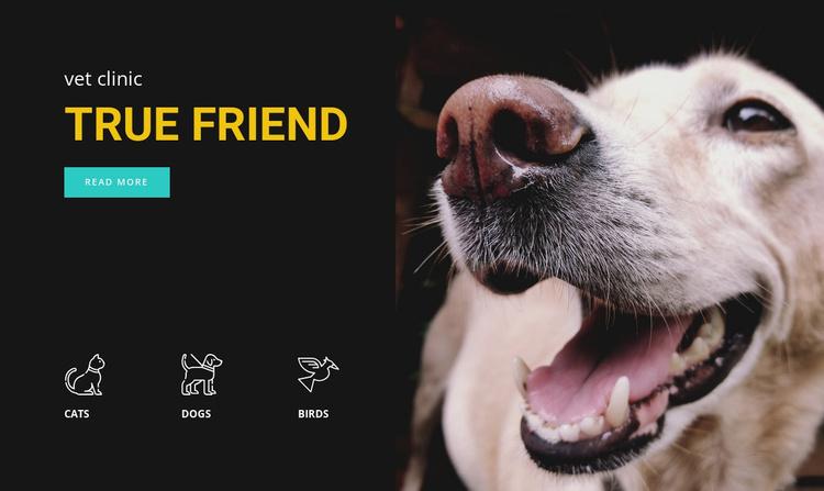 Animal hospital Website Template