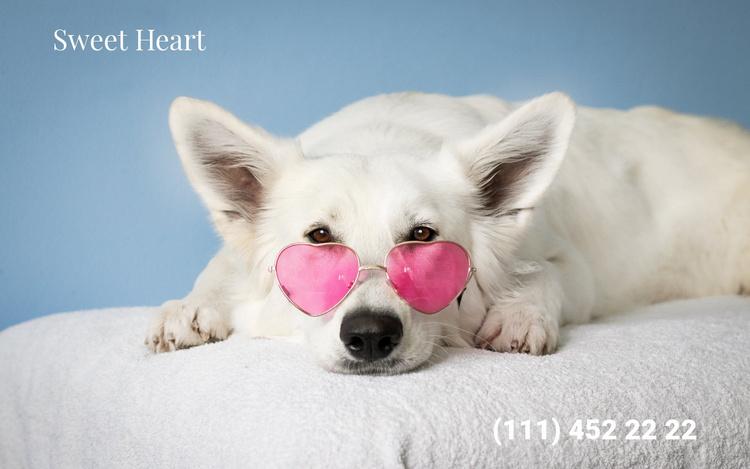 Emergency veterinary aid Website Template