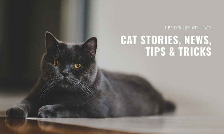 Cat stories and tips Website Template