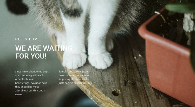 Pets Love HTML Template