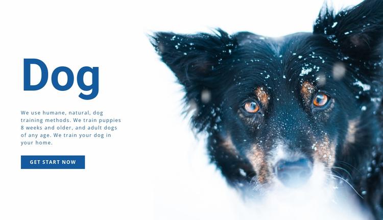 Dog training methods  Website Template