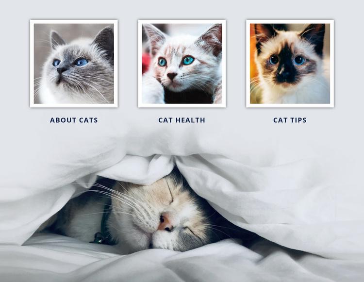 Veterinary doctor cats Website Template