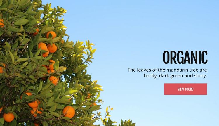 Organic natural fruit Website Template