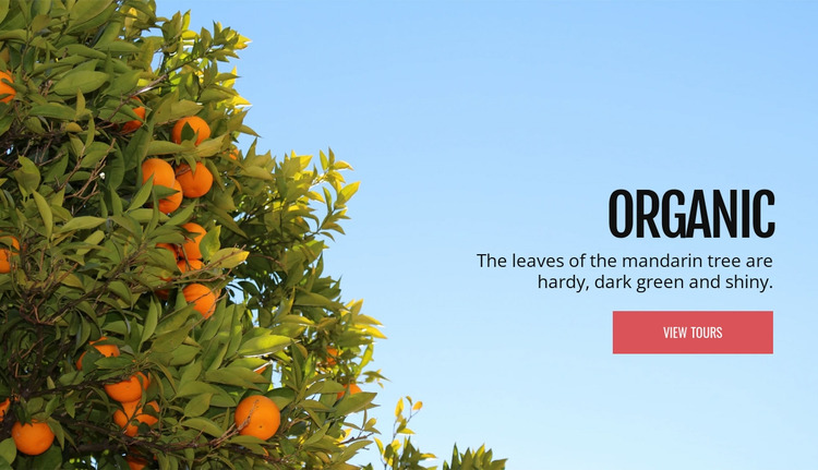 Organic natural fruit WordPress Website Builder