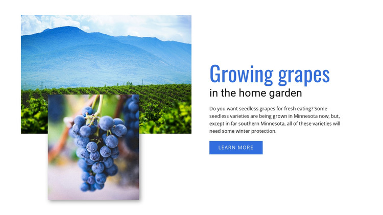 Growing grapes  HTML Template
