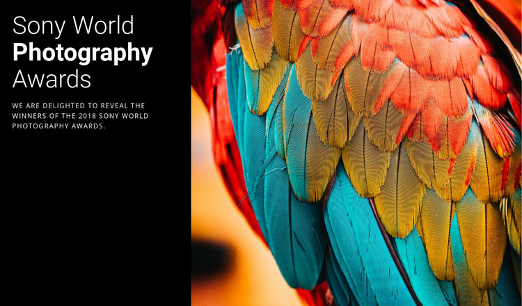 Photo Award of the Year WordPress Website Builder