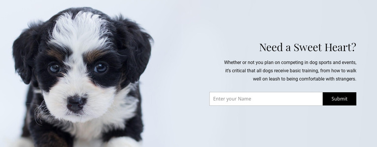 Take a dog from a shelter HTML Template