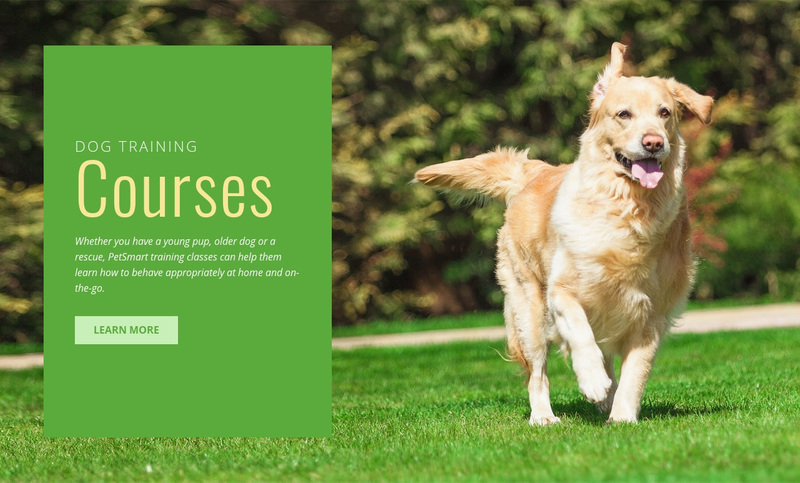Obedience training for dogs Web Page Design